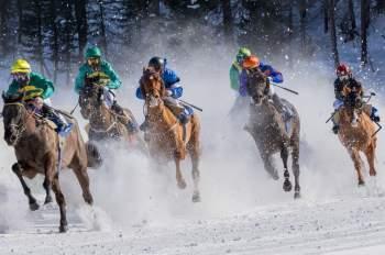 Pferdewetten Schweiz
